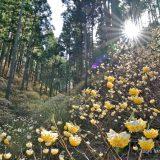 日光アレルギーの私が登山や野外を楽しむ時のたった1つの対処法・対策を解説してみる!