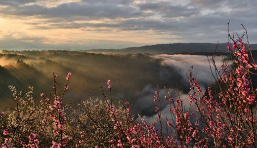 奈良県月ヶ瀬梅林で雲海と梅を撮影してきた!