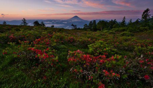 山梨県甘利山で富士山とレンゲツツジを撮影してきた!最高の朝焼けと共に見れた美しき景色!