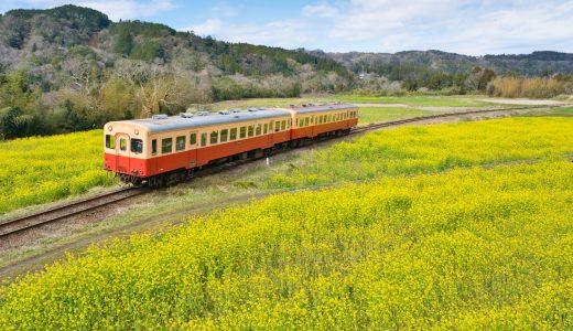千葉県、石神の菜の花畑と小湊鐡道を撮影してきた!古き良きディーゼル鉄道が菜の花畑を走る!