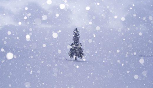 北海道、美瑛町でクリスマスツリーの木を撮ってきた!