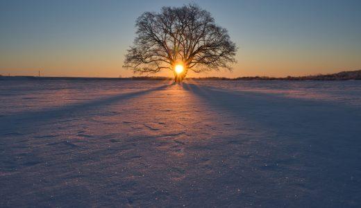 北海道、豊頃町でハルニレの木を撮ってきた!-24度は圧倒的絶望の世界、凍傷に気を付けろ!まじで!